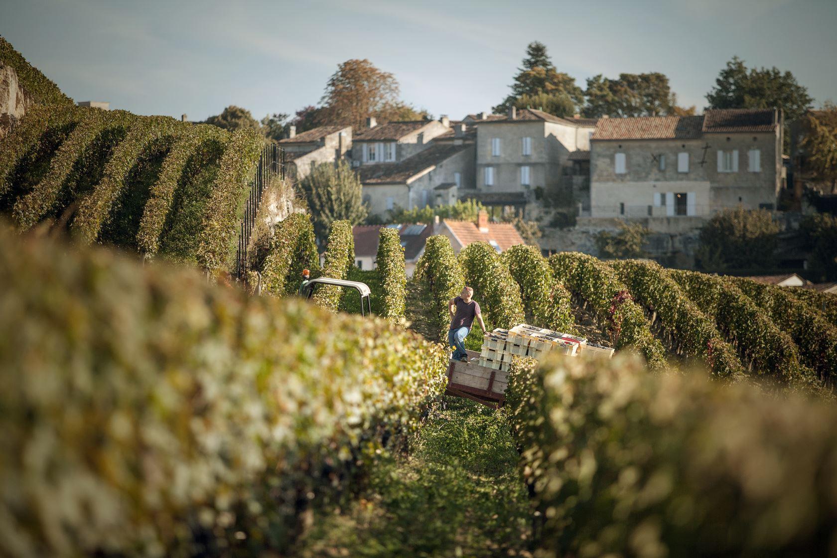 Coteaux Ausone Saint-Emilion
