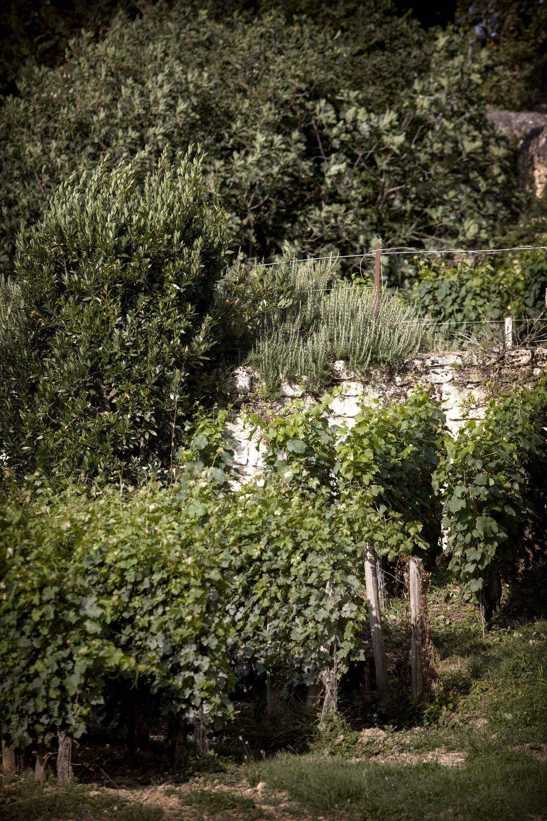 Ecosysteme château Ausone